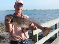 "Click to enlarge image Sept. 20, 2014~ James Hopkins of Austin, TX caught this 28"" red @9:30am using dead squid. - 2014 catches -"